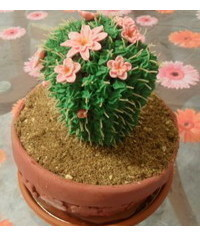 photo cactus cake