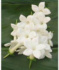 photo Stephanotis, Stephanotis, Stefanotis, Madagascar Jasmine