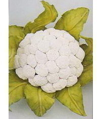 photo gumpaste cauliflower tutorial