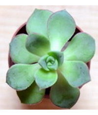 photo  How to make a succulent terrarium