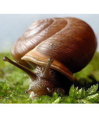 photo  snail,snail, hlem???, escargot Schnecke, lumaca, caracol