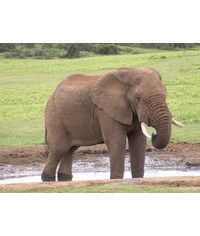 photo  Elephant, Elephant, Elephant, Elefant, Slon, ?l?phant