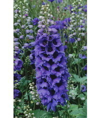 photo  Delphinium (larkspur) flower tutorial
