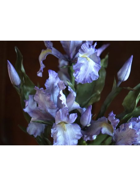 Iris flowers..I hope you like it!